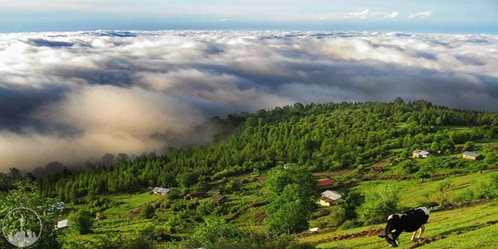 Babol and Amol Forests,iran tourism