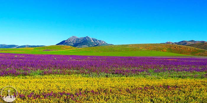 Plains,iran tourism