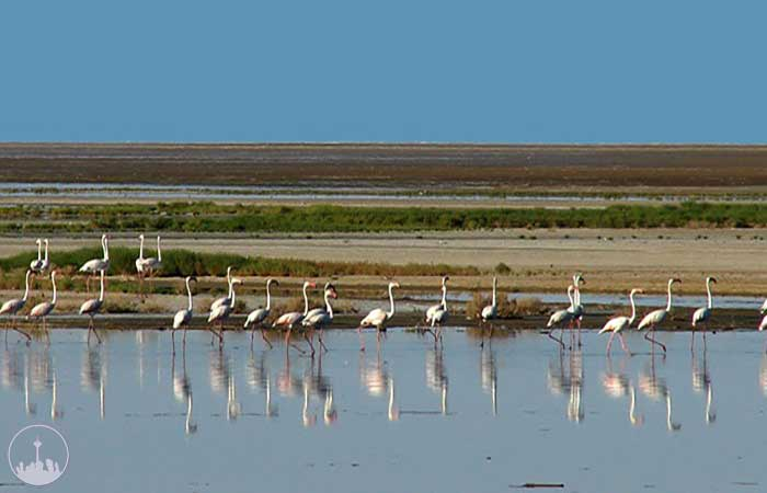 Wetlands,iran tourism